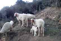 Azienda Agricola Casearia Regali Rurali, Lacona, Italy