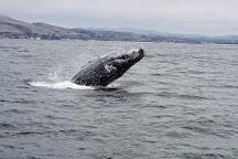Avila Beach Whale Watching, Avila Beach, United States