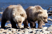 Alaska Bear Adventures, Homer, United States