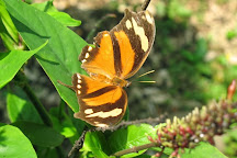 Mariposario Butterfly Garden, Montezuma, Costa Rica