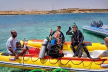 Ducks Diving Superior, Marsa Alam, Egypt