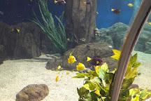 Sochi Discovery World Aquarium, Kurortny Gorodok, Russia