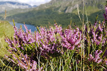 Maloja Pass, Canton of Graubunden, Switzerland