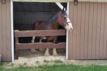 Larson's Famous Clydesdales, Ripon, United States