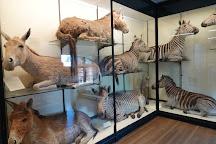 Natural History Museum at Tring, Tring, United Kingdom