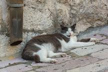 Cats of Kotor, Kotor, Montenegro