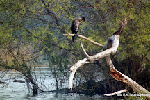 Keoladeo National Park, Bharatpur, India