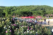 Samcheok Rose Park, Samcheok, South Korea