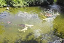 Les jardins aquatiques - Le Parc, Saint-Didier-sur-Chalaronne, France