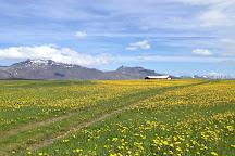 Salty Tour, Reykjavik, Iceland
