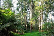 Fernshaw Picnic ground, Healesville, Australia