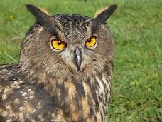 North Somerset Bird Of Prey Centre