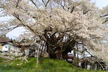 Jindaizakura of Suzakura Shrine, Nagano, Japan