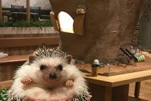 Hedgehog Cafe Harry Yokohama, Yokohama, Japan