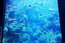 Cairns Aquarium, Cairns, Australia