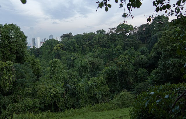 Mount Faber Photo View