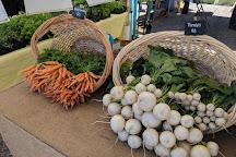 Corey Avenue Sunday Market, St. Pete Beach, United States