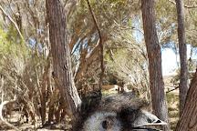 Emu Ridge Eucalyptus, Kingscote, Australia