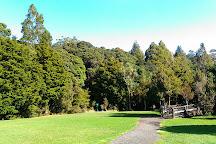 Trounson Kauri Park, Dargaville, New Zealand