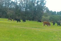 Whiteman Park, Whiteman, Australia