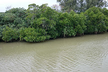 Shimajiri Mangrove Forests, Miyakojima, Japan