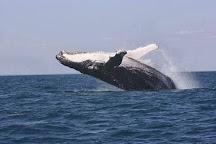 Broome Whale Watching, Broome, Australia
