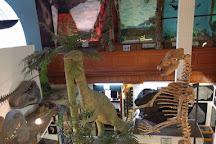 Dinosaurland Fossil Museum, Lyme Regis, United Kingdom