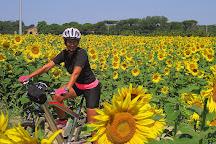 Versilia E-Bike Tours, Viareggio, Italy