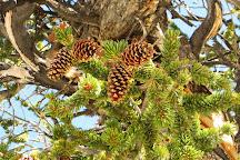 Ancient Bristlecone Pine Forest, Bishop, United States