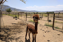 Adorable Alpacas, Tehachapi, United States