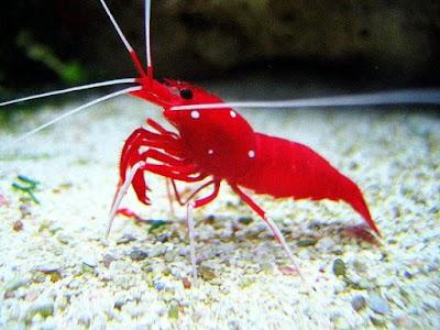 Fish Aquarium Home Delhi India Phone 91 11 2254 2914