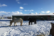 Arctic Horses, Grindavik, Iceland