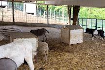 Lago Parco Zoo, Modena, Italy