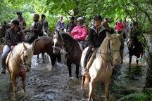 Trevelog Farm Pony Trekking, Llanthony, United Kingdom