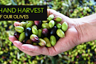 Fresh Harvest Tasting Room - Eureka Springs
