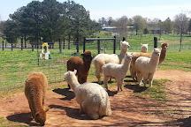 Southern Estates Alpacas, Adairsville, United States
