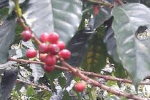 Finca Cafetera La Esmeralda, Ubaque, Colombia