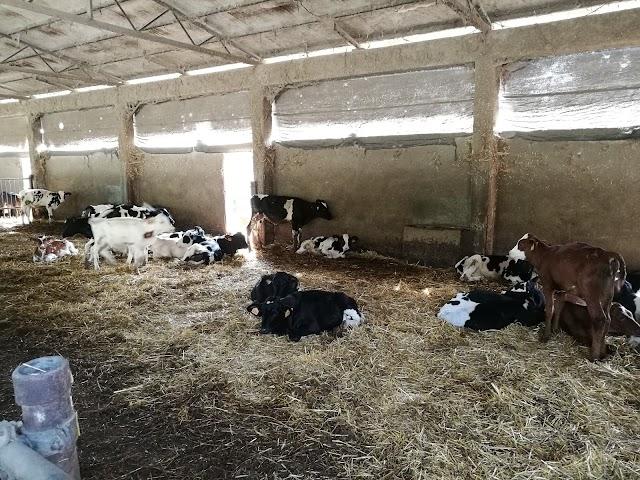 Azienda Agricola Cascina Orsine Societa'Semplice