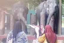 Kuala Gandah Elephant Sanctuary, Pahang, Malaysia