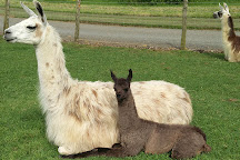 Catanger Llamas, Towcester, United Kingdom