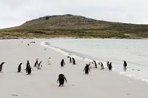 Carcass Island, Carcass Island, Falkland Islands