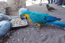 Cocodrilo Park Gran Canaria, Gran Canaria, Spain