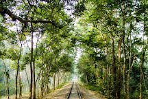 Lawachara National Park, Sreemangal, Bangladesh
