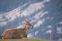 Salva Fauna, Geneva, Switzerland