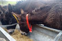 The Donkey Sanctuary, Sidmouth, United Kingdom