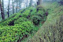 Batasia Loop, Darjeeling, India