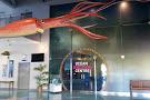 Bermuda Underwater Exploration Institute