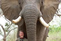 Steve Morvell Wildlife Art, Halls Gap, Australia