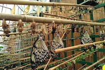 Edinburgh Butterfly & Insect World, Lasswade, United Kingdom