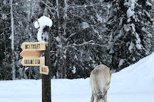 Kujala Reindeer Farm, Kuusamo, Finland
